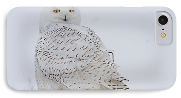 Winters White IPhone Case