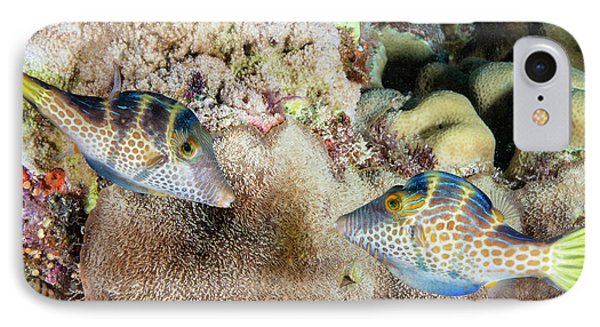 Wire-net Filefish Mating Display IPhone Case