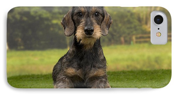 Wirehaired Dachshund IPhone Case