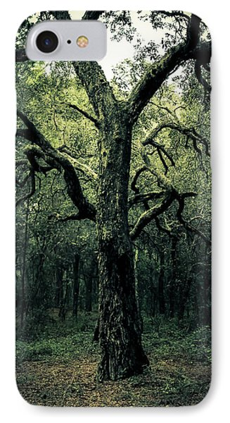 Wise Old Tree Phone Case by Robin Lewis