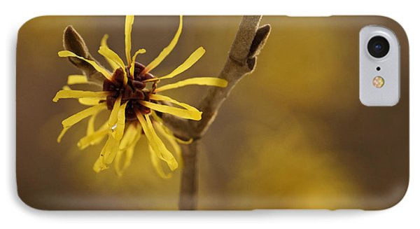 IPhone Case featuring the photograph Witch Hazel by Inge Riis McDonald