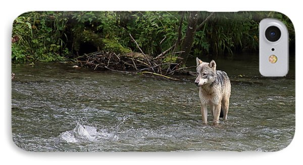 Wolf At Fish Creek IPhone Case