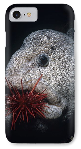 Wolf-eel And Red Sea Urchin IPhone Case by Jeff Rotman