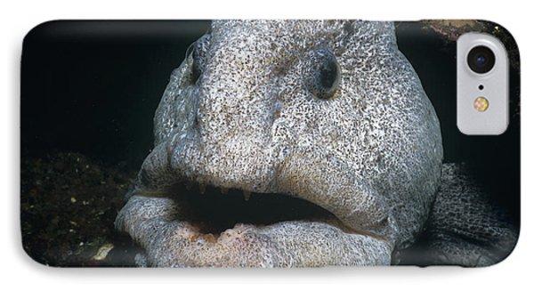 Wolf-eel IPhone Case by Jeff Rotman