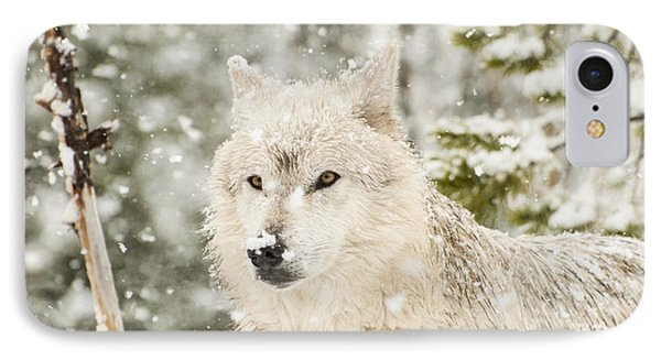 Wolf In Snow IPhone Case