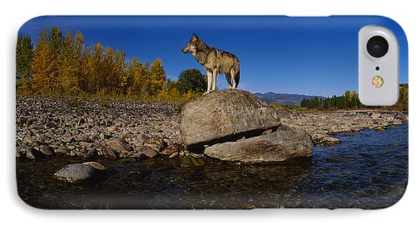 Wolf Standing On A Rock IPhone Case by Panoramic Images