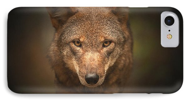 Wolf Stare Phone Case by Karol Livote