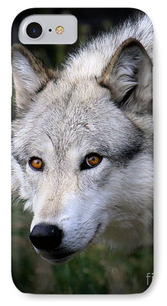 IPhone Case featuring the photograph Wolf Stare by Steve McKinzie