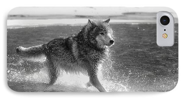Wolves-animals-image 8 IPhone Case by Wildlife Fine Art