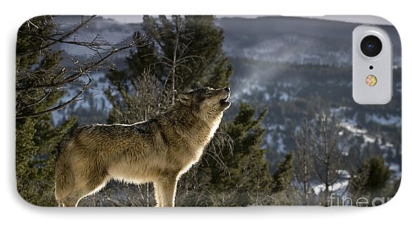 Wolves Nature Song IPhone Case by Wildlife Fine Art