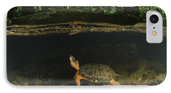 Wood Turtle Swimming North America IPhone Case by Pete Oxford