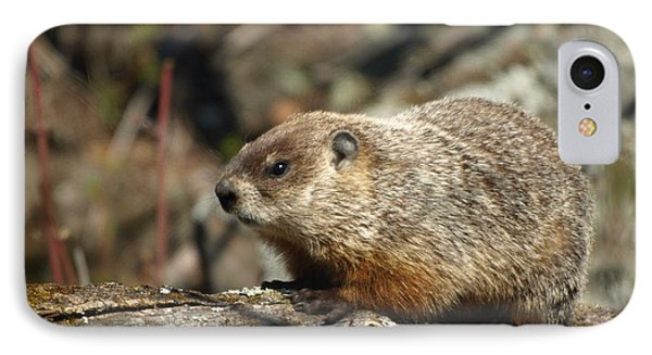 IPhone Case featuring the photograph Woodchuck by James Peterson