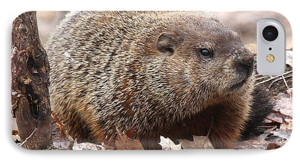 Woodchuck Watching IPhone Case by Doris Potter