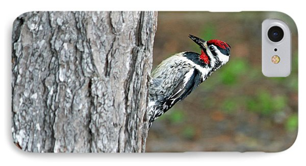 IPhone Case featuring the photograph Woodpecker by Barbara West