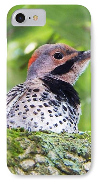 Woodpecker IPhone Case by Judy Via-Wolff