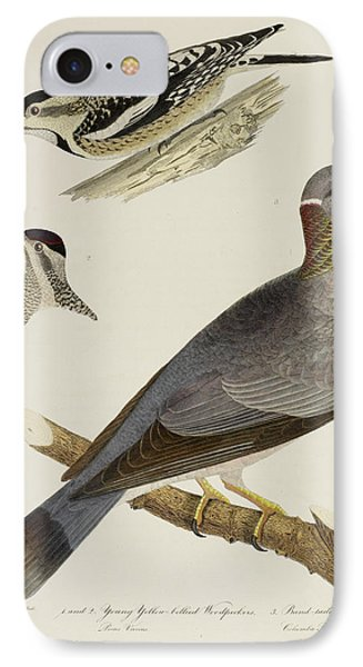 Woodpeckers And Pigeon IPhone Case by British Library