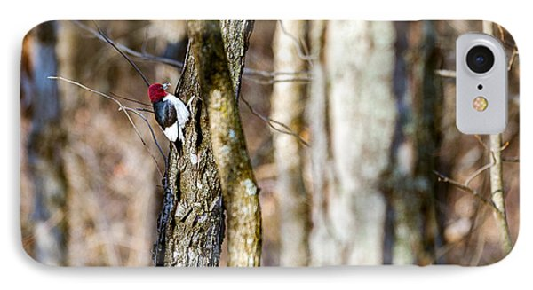 IPhone Case featuring the photograph Woody by Sennie Pierson