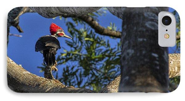 Woody Woodpecker IPhone Case by David Gleeson