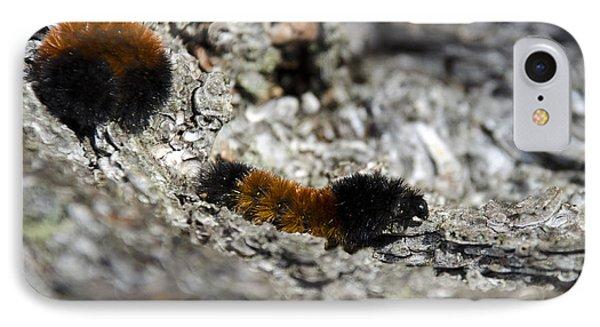 Woolly Bear Caterpillar Phone Case by Christina Rollo