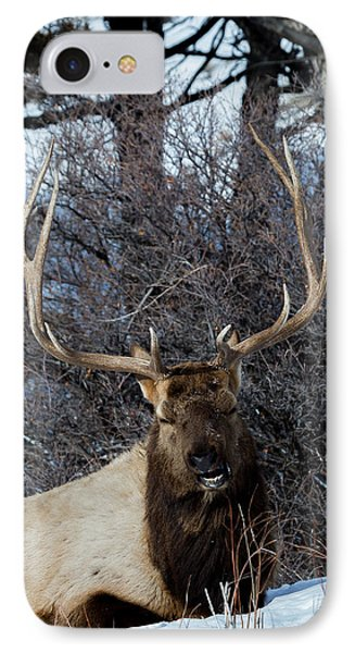 Wyoming Elk IPhone Case