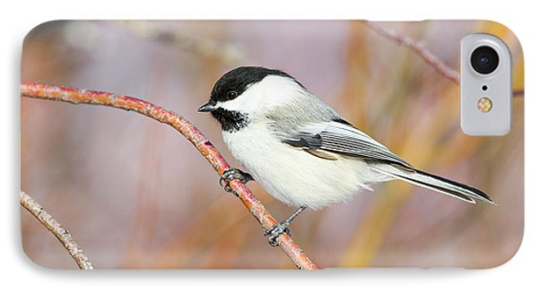 Wyoming, Sublette County, Black-capped IPhone Case by Elizabeth Boehm