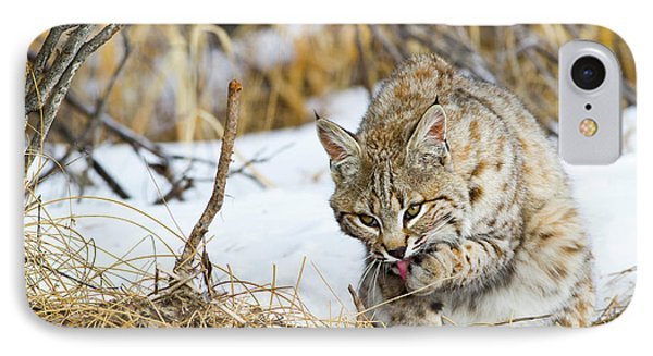 Wyoming, Sublette County, Bobcat IPhone Case by Elizabeth Boehm