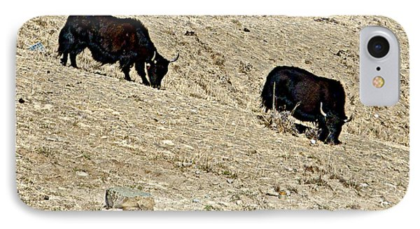 Yaks In Himalayas Along Friendship Highway-tibet   IPhone Case by Ruth Hager