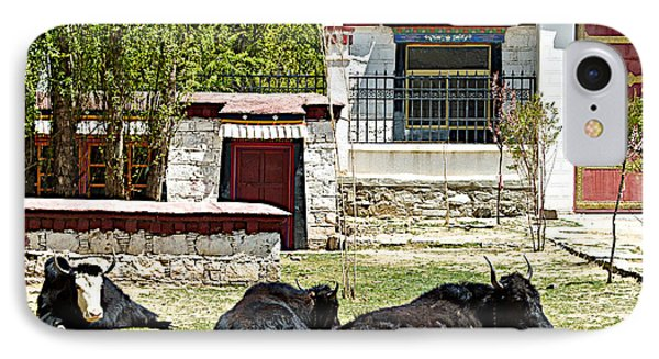 Yaks On Grounds Of Sera Monastery In Lhasa-tibet  IPhone Case by Ruth Hager