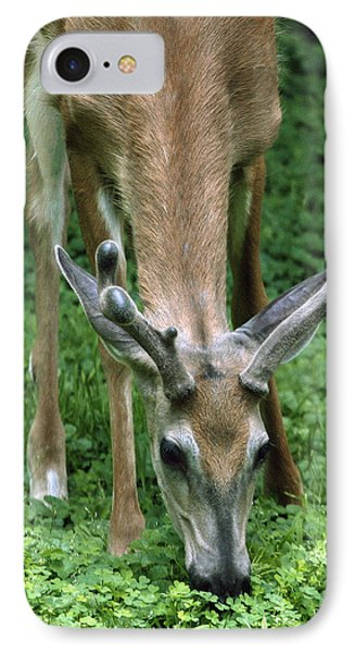 IPhone Case featuring the photograph Yearling Buck In The Clover by Gene Walls