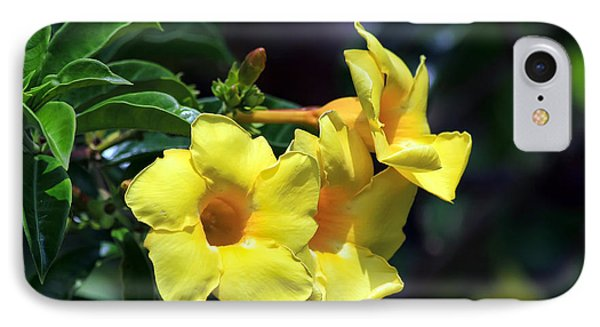 IPhone Case featuring the photograph Yellow Allamanda by Teresa Zieba