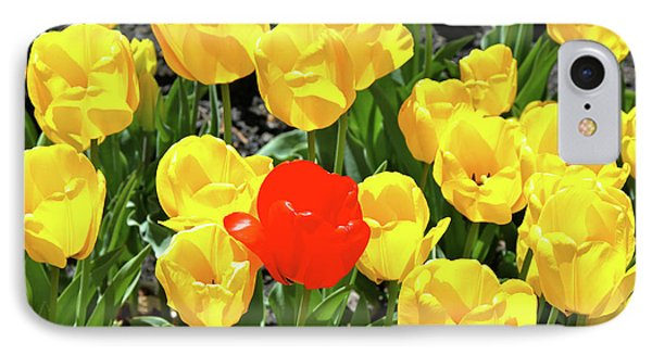 Yellow And One Red Tulip IPhone Case by Ed  Riche