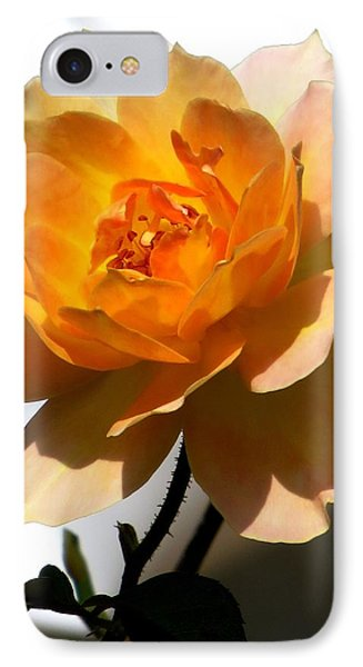 Yellow And White Rose IPhone Case by Zina Stromberg