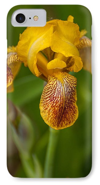 Yellow Bearded Iris IPhone Case by Brenda Jacobs