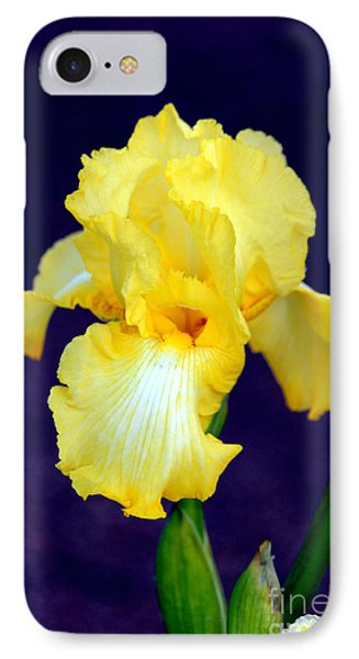 Yellow Bearded Iris Phone Case by Kathy  White