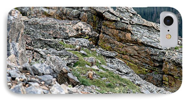 Yellow Bellied Marmot In The Rockies IPhone Case