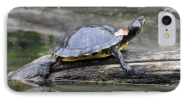 Yellow Bellied Slider Basking IPhone Case by Paul Fearn