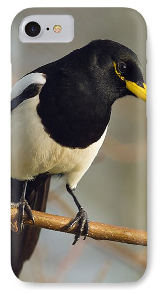 Yellow-billed Magpie IPhone Case