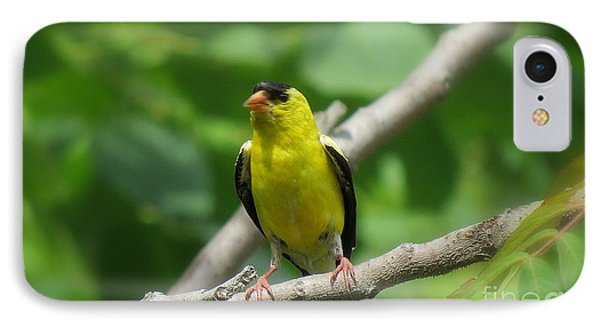 Yellow Bird IPhone Case by France Laliberte