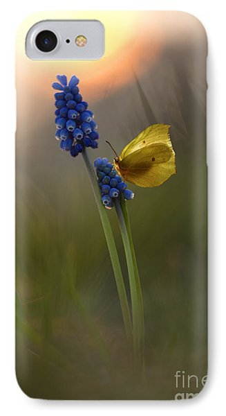 Yellow Butterfly On Grape Hyacinths IPhone Case by Jaroslaw Blaminsky