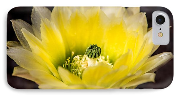 Yellow Cactus Flower Phone Case by  Onyonet  Photo Studios