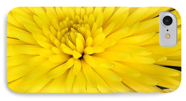 Yellow Chrysanthemum IPhone Case by Pattie Calfy