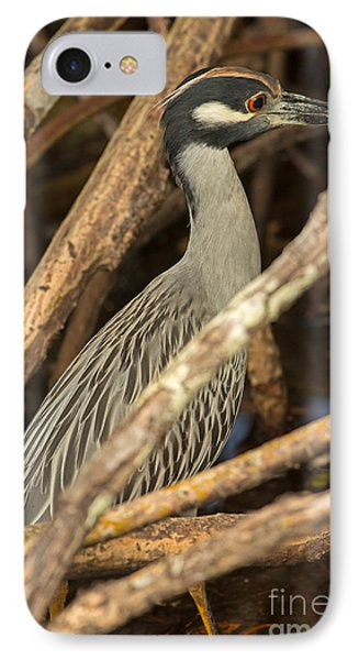 Yellow Crowned Night Heron Fishing IPhone Case by Natural Focal Point Photography