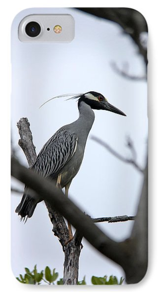 Yellow Crowned Night Heron IPhone Case by Marta Alfred