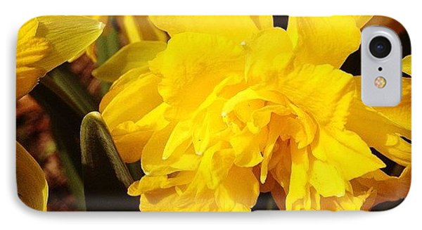 Yellow Daffodils IPhone Case by Christy Beckwith
