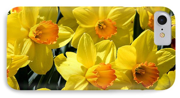 Yellow Daffodils IPhone Case by Menachem Ganon