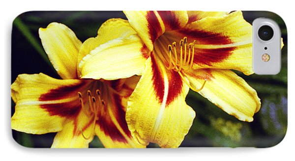 IPhone Case featuring the photograph Yellow Daylilies  by Tom Brickhouse