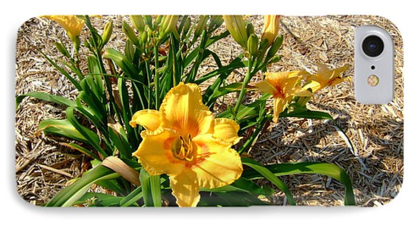 IPhone Case featuring the photograph Yellow Daylily by Deborah DeLaBarre