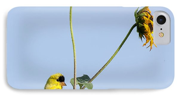 Yellow Delight 2 IPhone Case by David Lester
