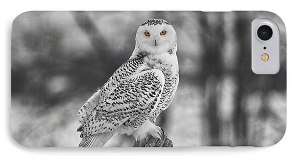 Yellow Eyes IPhone Case by Eunice Gibb