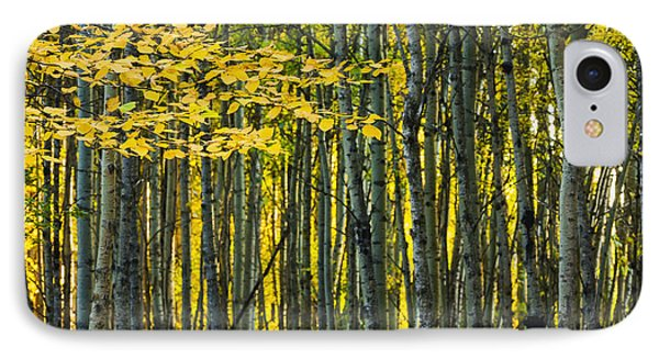 Yellow Fall Birch Leaves Against An Phone Case by Joel Koop